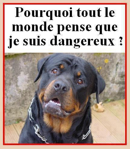 dangereux ou pas...