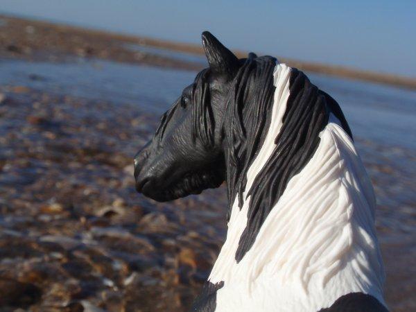 DN : Shooting photo : Blackberrie sur la plage de Houlgathe