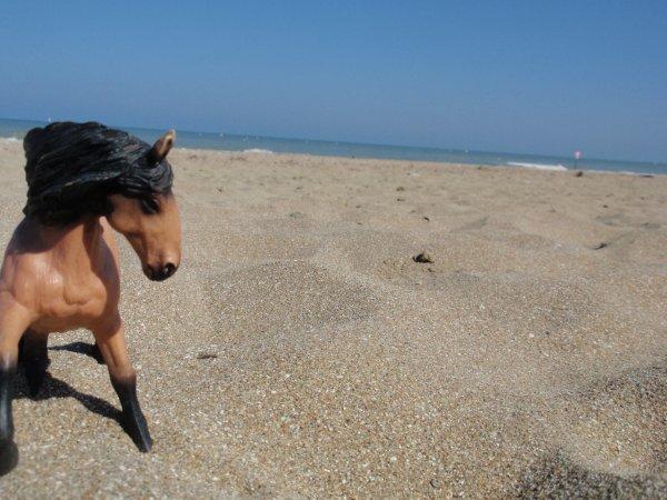 [ DN ] Shooting photo : Galouchka à la plage
