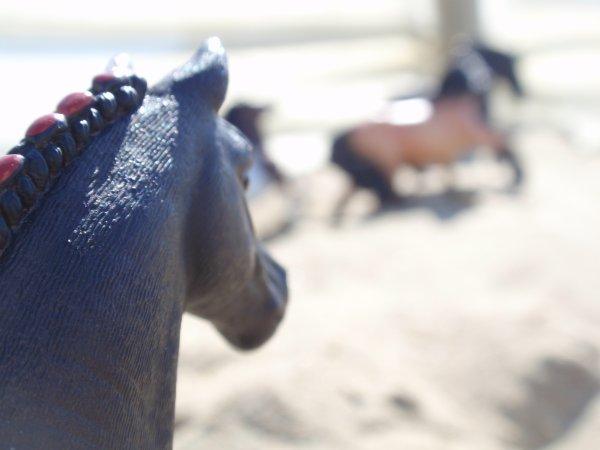 [ DN ] Shooting photo : Tous à la plage !