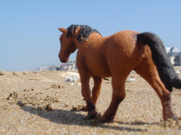 [ DN ] Shooting photo : Sympho' à la plage
