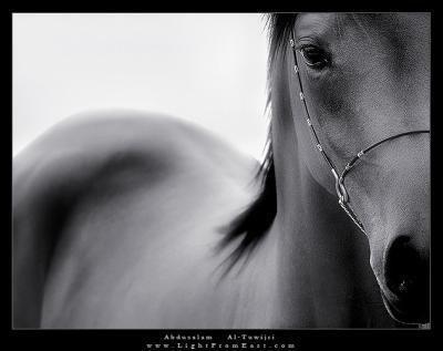 L'équitation une Passion depuis 7ans ‼