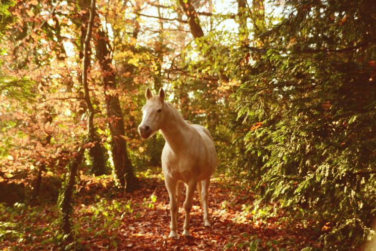« Je préfère un cheval réactif et contestataire qu'un cheval docile mais sans vie. »