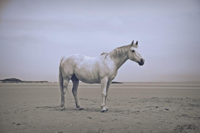 « L'extérieur du cheval exerce une influence bénéfique sur l'intérieur de l'homme. »