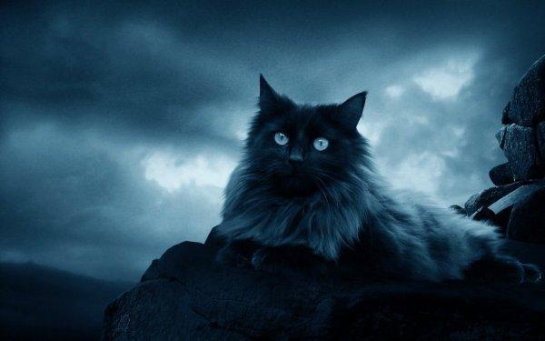 Guérisseur du Clan de la Nuit