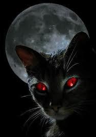 Petits du Clan de la Nuit