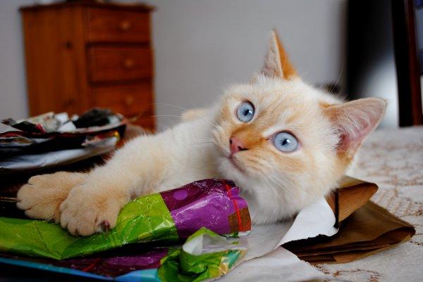 Il y a deux moyens d'oublier les tracas de la vie : la musique et les chats