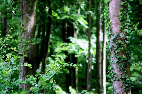 forêt du guines ^^