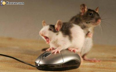 Souris!!!!!!!! Tu est sur mon blog!!