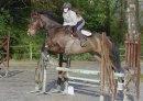 Photo de Horse-Sales