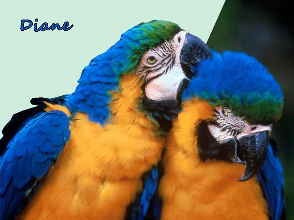 Mes tubes animaux oiseaux