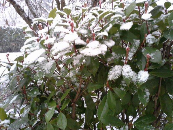 Chouette , il neige ..!!!!