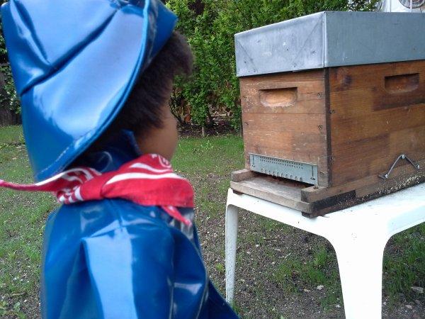 Sale temps pour les abeilles .-1-......!