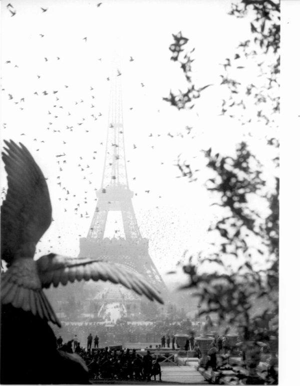 Un lâcher de pigeons voyageurs militaire de St Germain en Lay le 14 Juillet 2017, pourquoi pas?