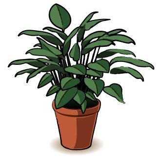 Astuce pour un bon engrais des les plantes d'interieur