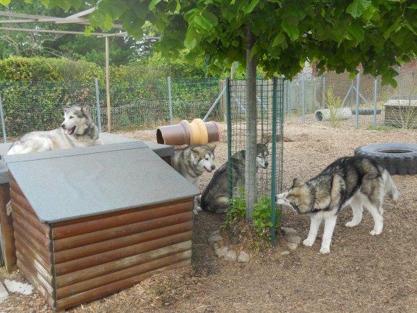 """..: Visite de l'élevage """"On Kamiakan Trail"""" :.."""