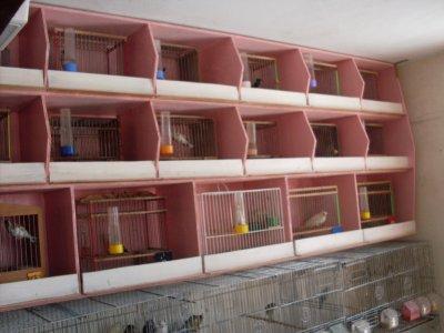 Ma chambre d'élevage aprés renouvelement