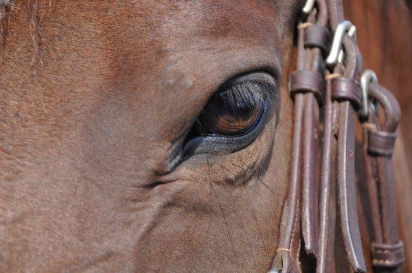 Les chevaux sont uniques