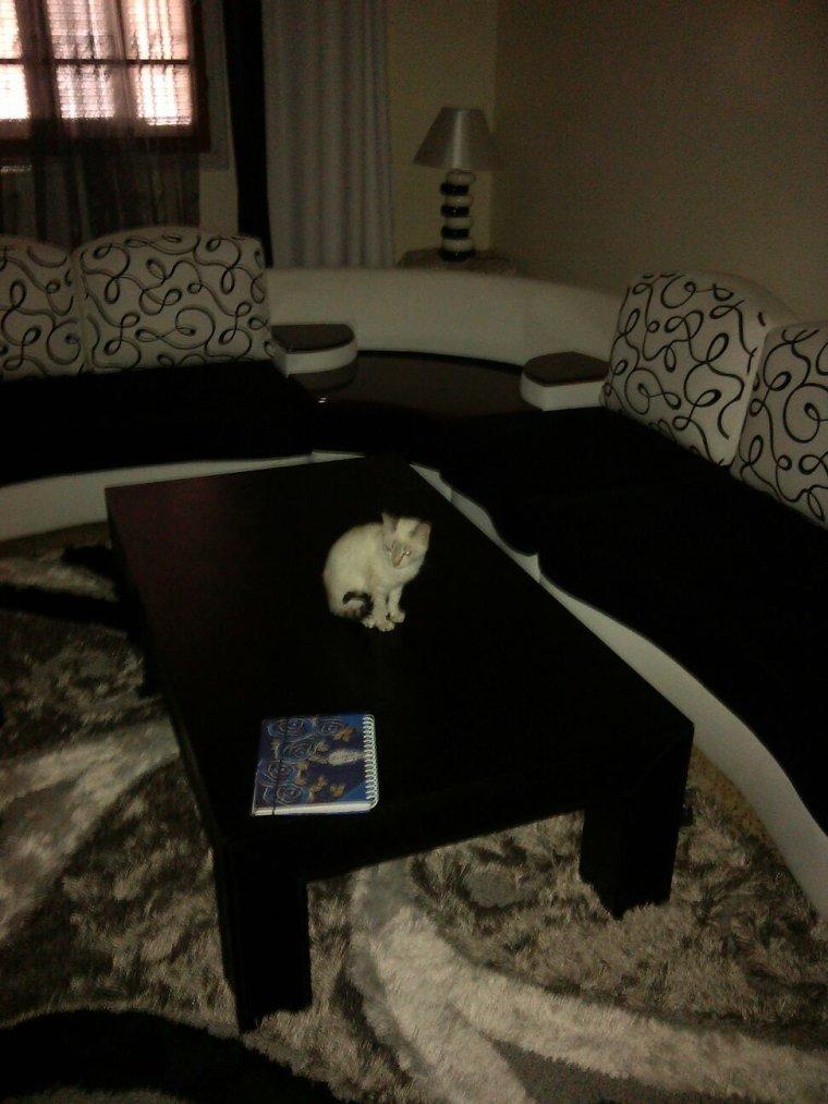 Mon chat lol
