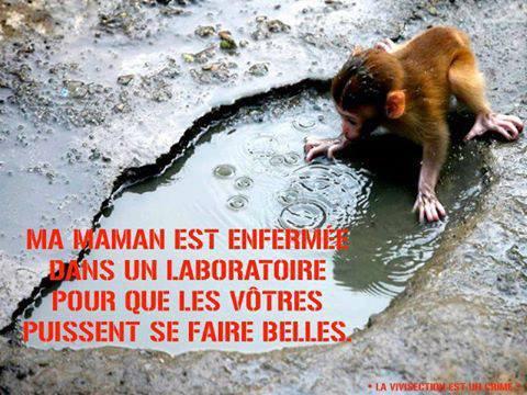 STOP vous faite des orphelin!!!