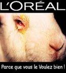 Photo de SOS-animaux-en-detresse
