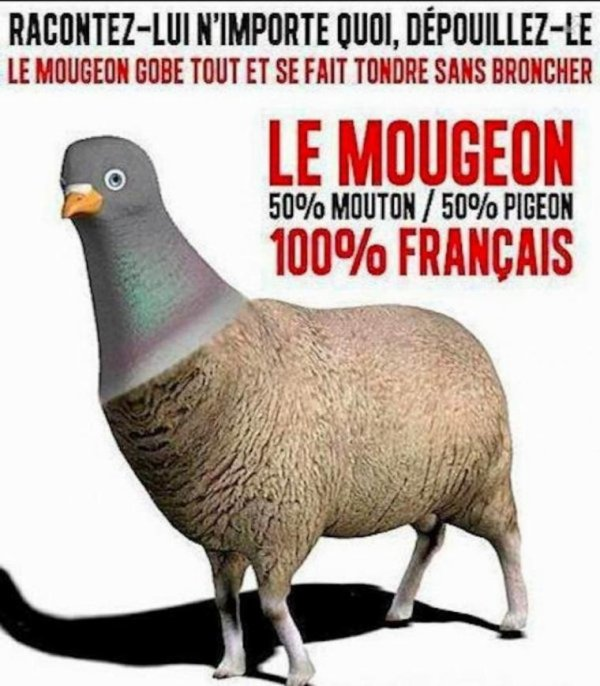 BANDE DE MOUGEON !!