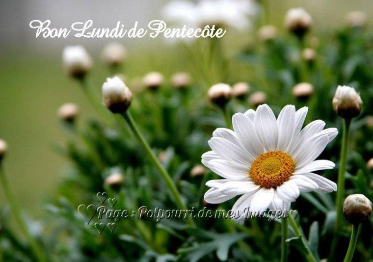 bonjour à tous mes amis(e)s .. je vous souhaite une belle journée du lundi de Pentecôte ..et un excellent début de semaine .. bisous Josie