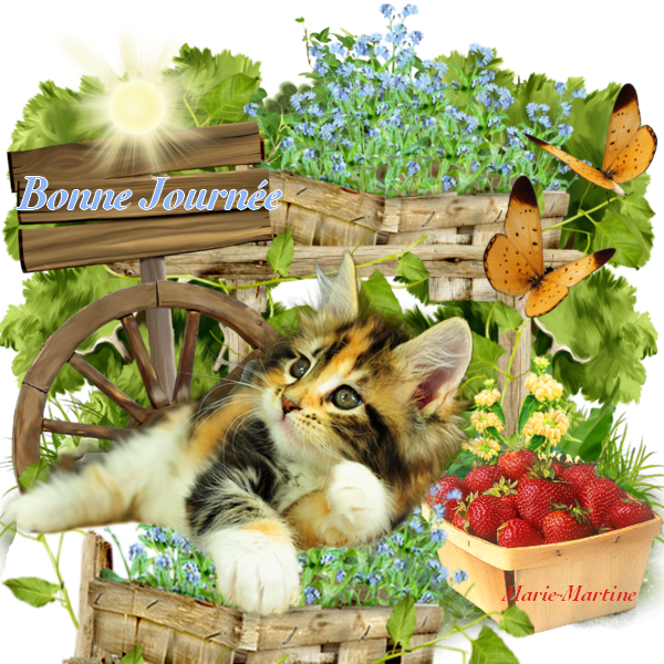 bonjour à tous mes amis(e)s .. je vous souhaite une belle journée de samedi ensoleillée.. bisous Josie