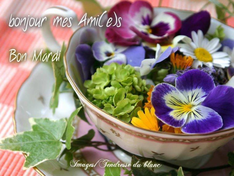 bonjour mes amis(e)s.. je vous souhaite un très bon appétit .. et un agréable après midi de mardi, ici avec un beau soleil .. bisous Josie