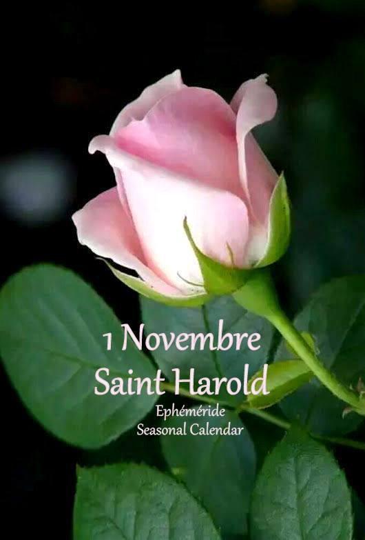 bonjour mes amis(es) .. je vous souhaite un excellent appétit, et un bel après midi du mercredi 1er Novembre  .. ici magnifique temps d'automne .. bisous Josie