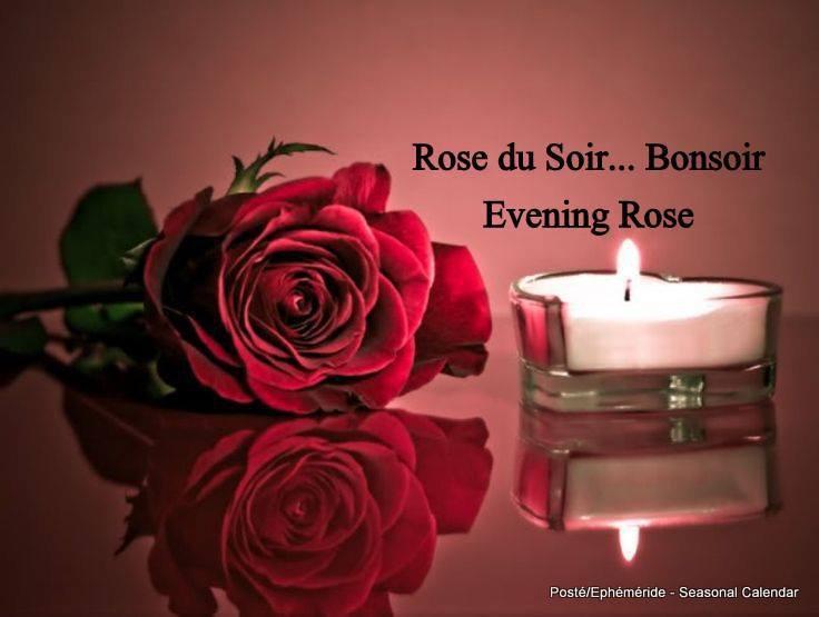 bonsoir mes amis(es) .. je souhaite à tous une très bonne soirée, et une belle nuit étoilée de rêves tendres .. bisous Josie