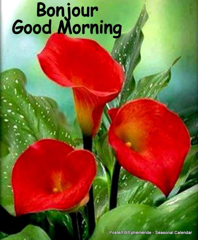 Bonjour mes amis(es) je souhaite à tous une belle journée de mardi ... Gros bisous Josie