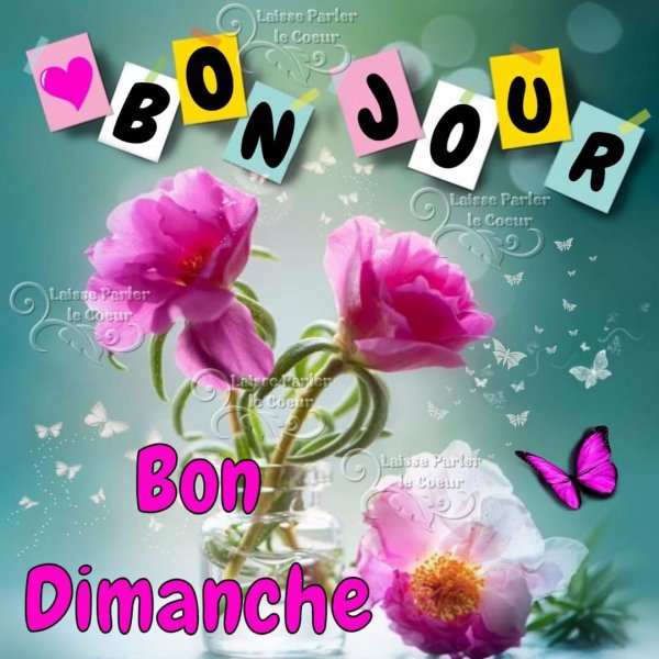 Dimanche 25 avril 3337481674_1_2_zwbed8FB