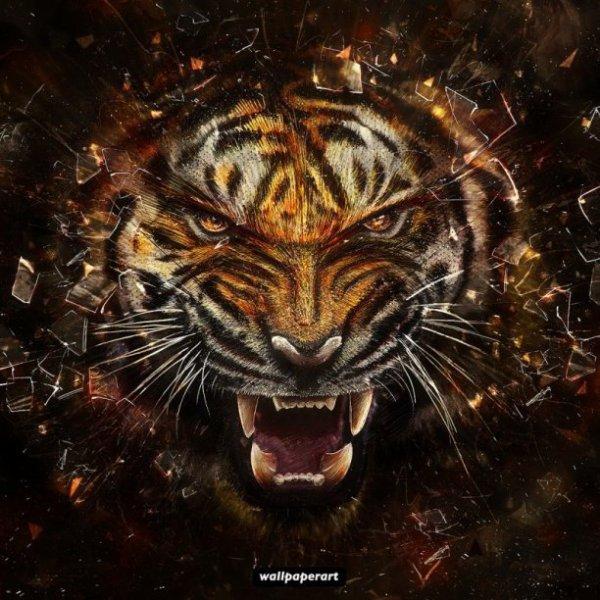 Alors qui aime les tigre ?