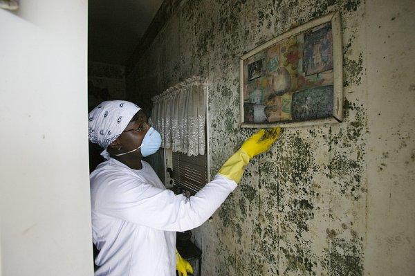 Best Professional Mold Inspection NJ