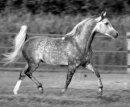 Photo de zozote-chevall-du64