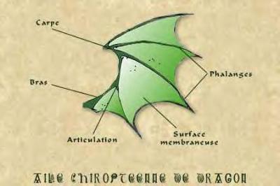 Description d 39 une aile de dragon le monde des dragons - Aile de dragon dessin ...