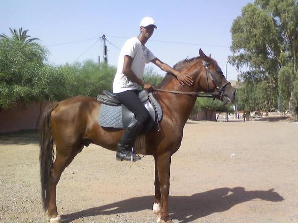 moi vec mon chevale ardlis