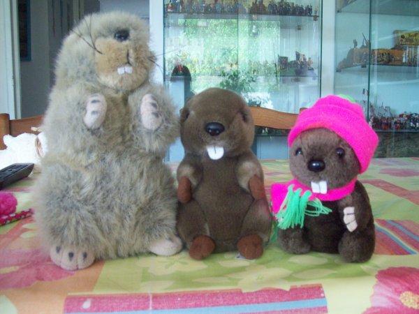 Nouvelle marmotte