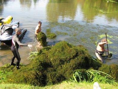 La récolte des algues (II)