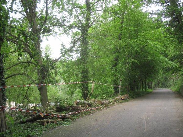 Liverdun : Chute d'arbre / Route du pisuy  barrée.