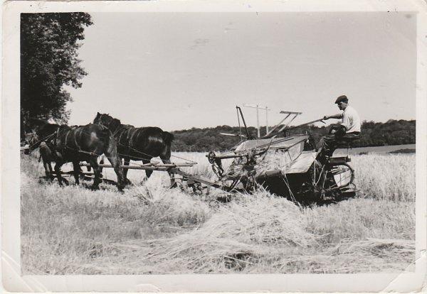 Liverdun : Bourg agricole ( III ) .