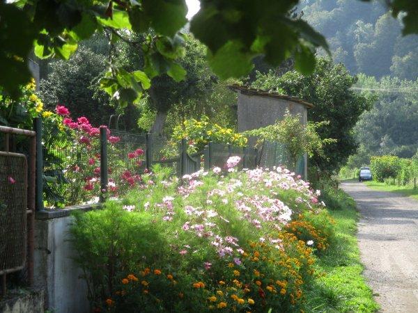 Promenade ...fleuries ...
