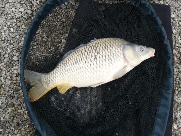 pêche au carpodrome au sens de l eau poste 18
