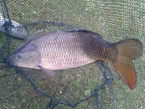 pêche rapide :-)