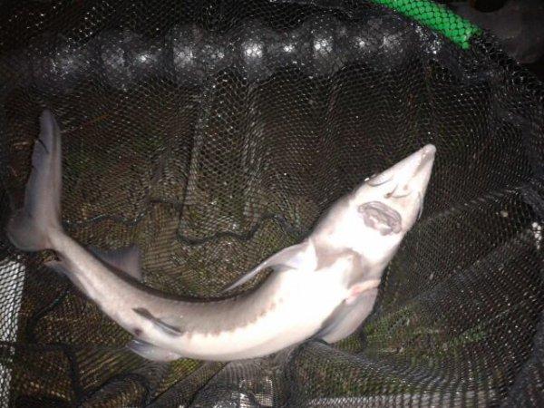 pêche nocturne au sens de l'eau