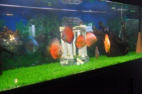 les penssionnaires de mon aquarium