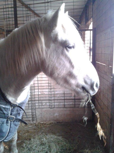 Kansas mon magnifique cheval