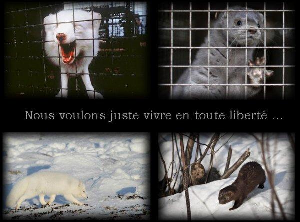 _____ « De l'assassinat d'un animal à celui d'un homme, il n'y a qu'un pas »