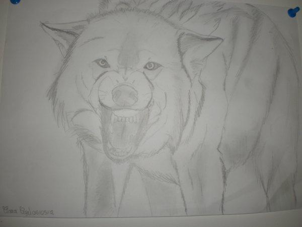 Loup en colère !